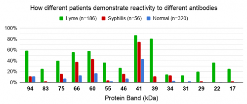 Antibodies in Lyme, normal, and syphilis patients
